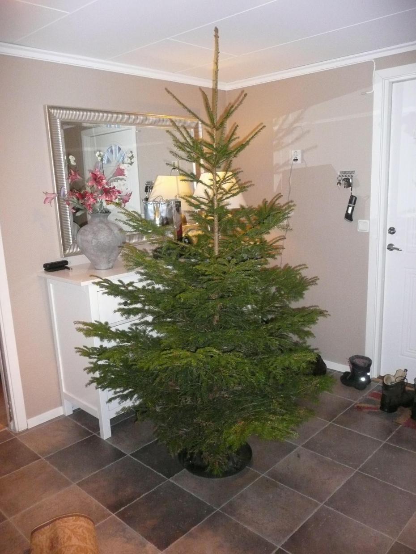 a bare christmastree